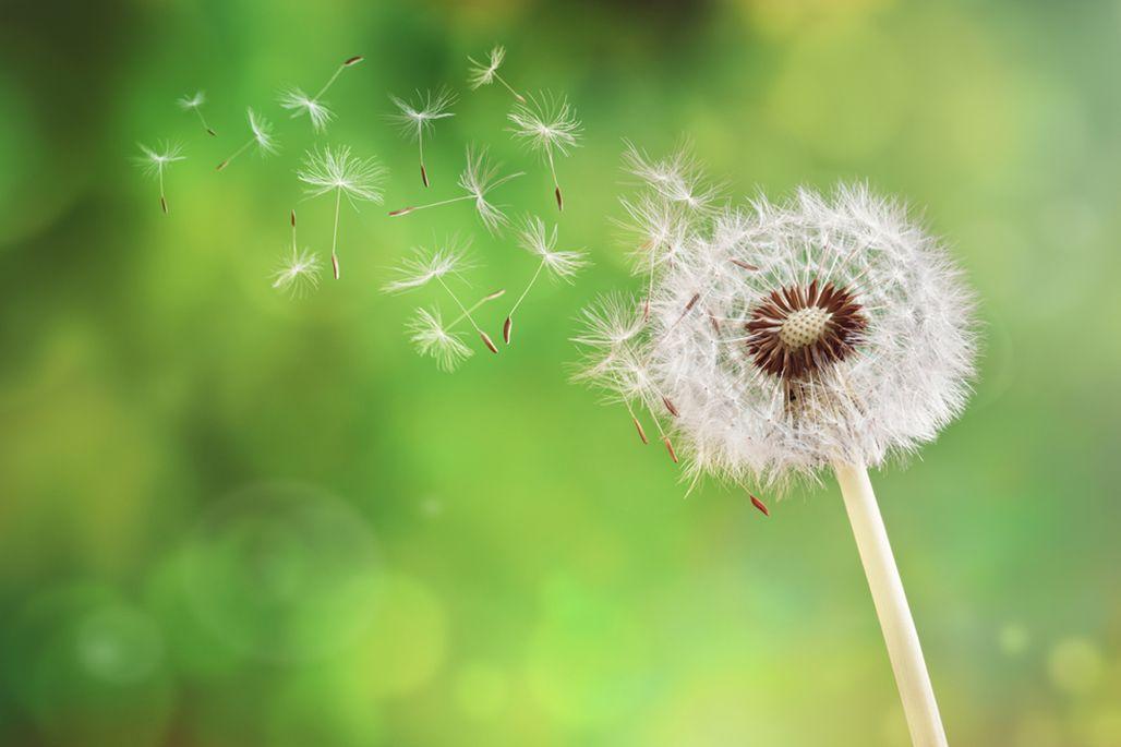 pollen in the wind