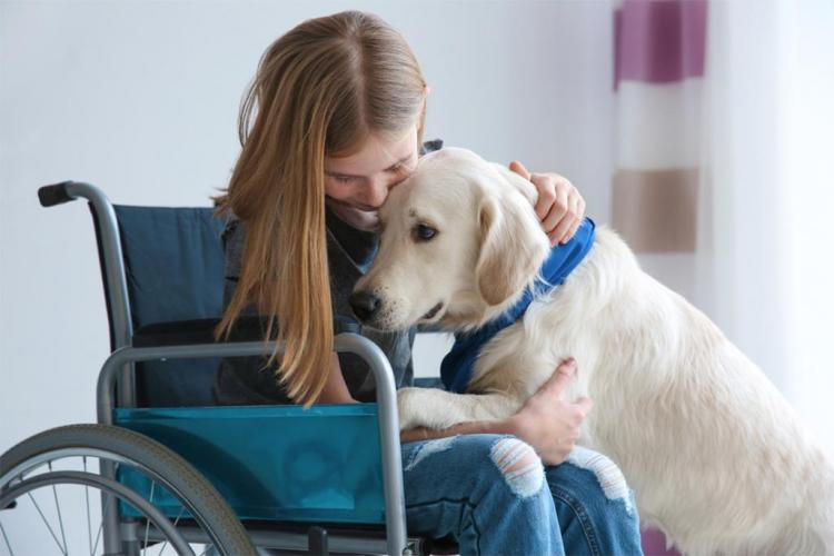 Service dog helping young girl